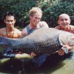 パーカーホ(Wiki)味は?釣り方の動画や稚魚の値段、飼育方法も!【メコン川のシャム鯉】
