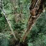 コロワイ族は食人種?画像やWiki、生活や文化は?パプアニューギニアのセンディック村の木の上に住む部族!