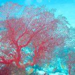 海の樹氷イソバナロック(喜界島)の画像(写真)や場所、見頃やツアーは?