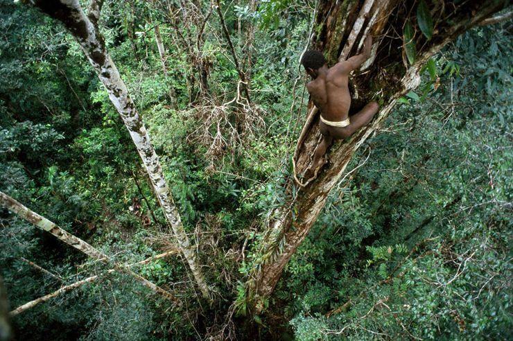 コロワイ族(食人種)の生活・文化は?食人はヤラセ?インドネシアの木の上に住む部族!