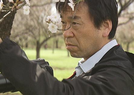 和田博幸(樹木医)の経歴(Wiki・学歴)や年収・結婚、桜の画像や樹木医になるには?【プロフェッショナル】