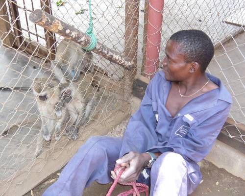 ウガンダのサバンナモンキーに育てられた少年ジョンの今現在や家族(父親・母親)、デイジーとの関係は?